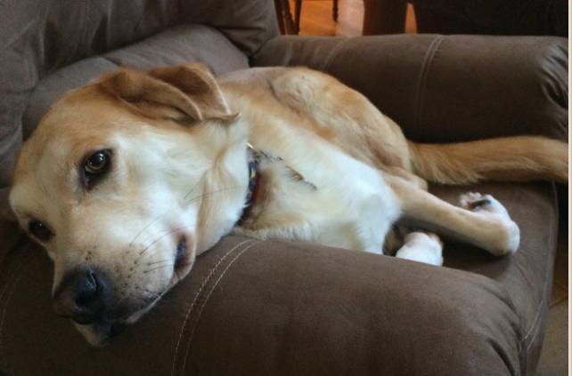 oakley-resting